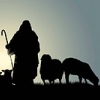 Sermons On The Devine Shepherd And His Flock
